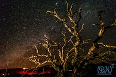 Scraggle Tree and Stars