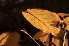 Herbst (01)