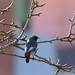 Bird!   #likeforlike by angeloconcilio1