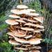 Tower of Mushrooms