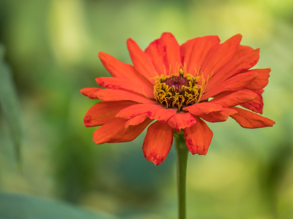 Bokeh de fleur... 44520317705_075143ee4a_b