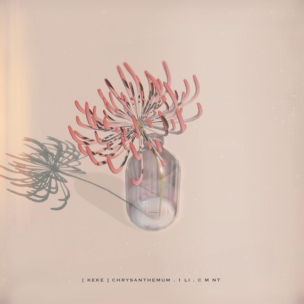 [ keke ] chrysanthemum - TeleportHub.com Live!
