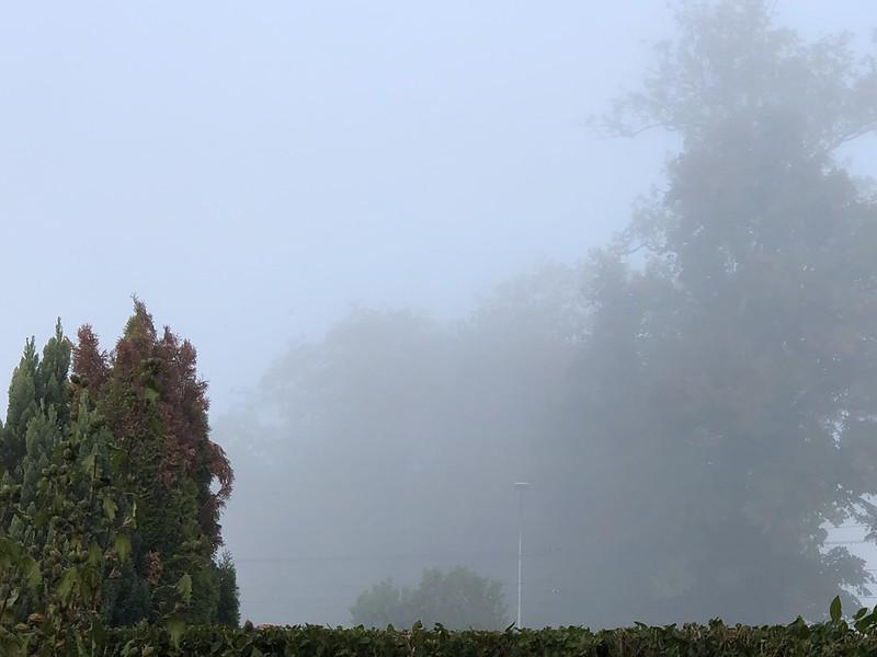 Misty Moning
