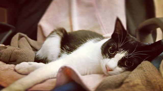 20181002 晚安 #戴家黑糖蜜 #cats #livingwithcats