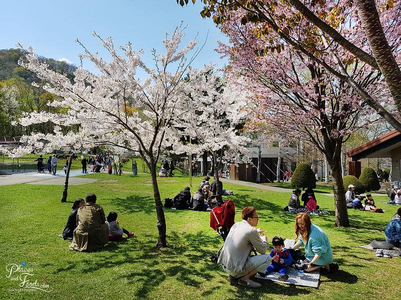 maruyama zoo sakura trees