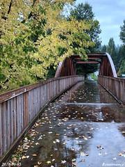 Rain, Leaves, Bridge
