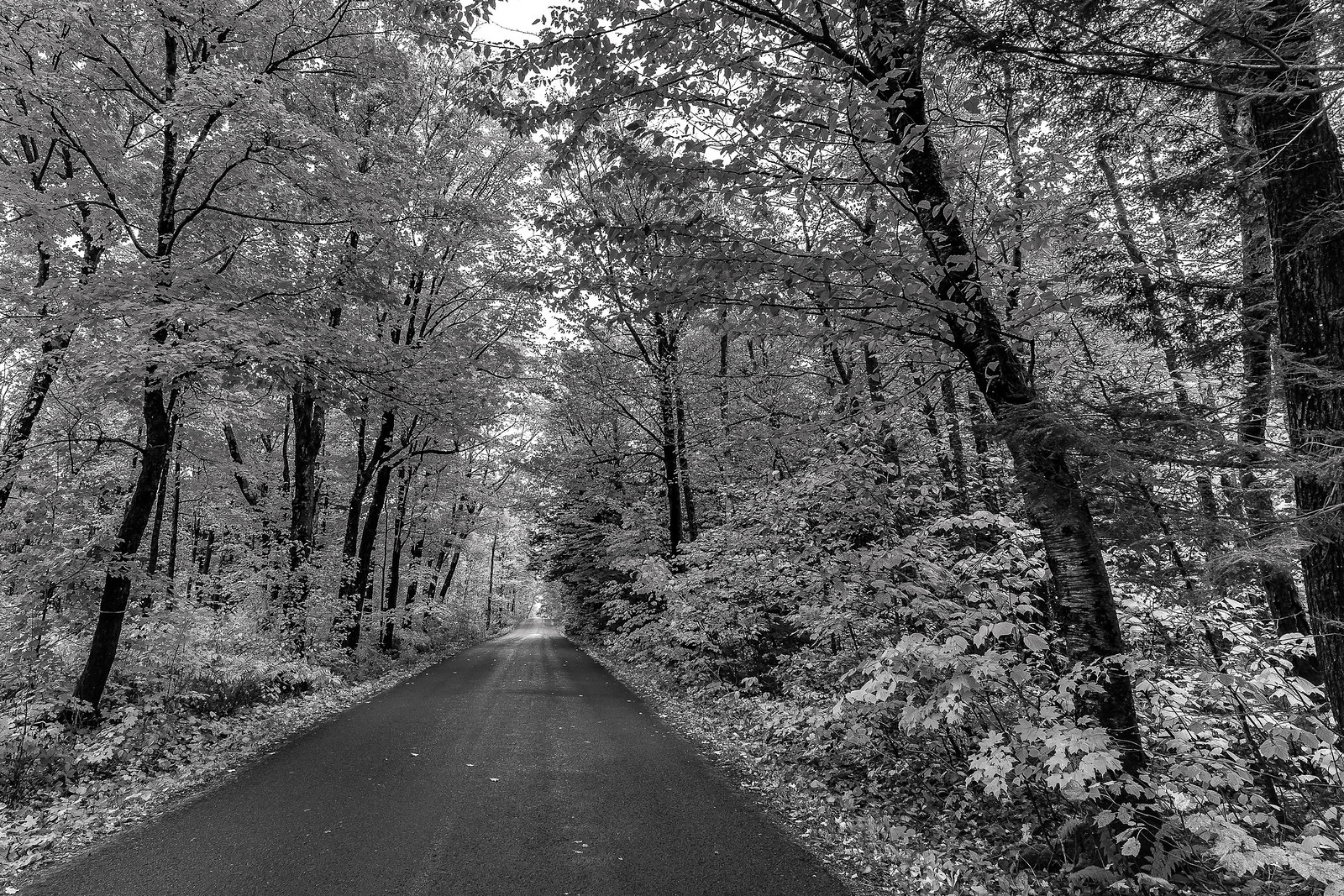 L'automne sans couleur... 45231660212_5e6791ffc3_h