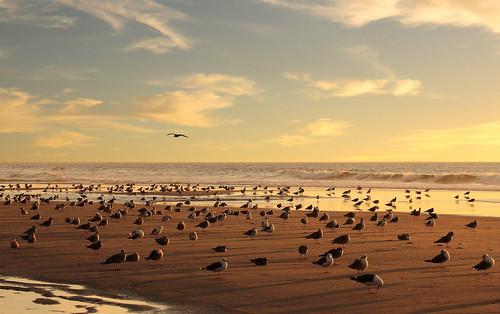Sunny autumn beach