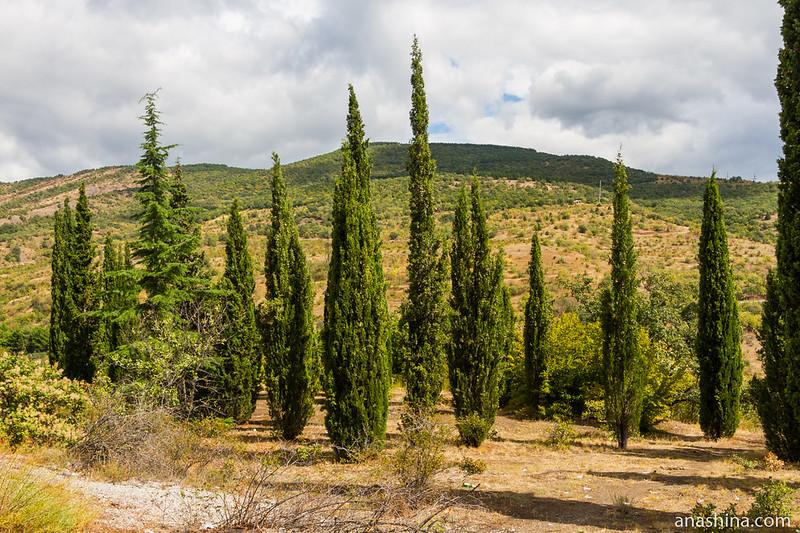 Кипарисы, Крым