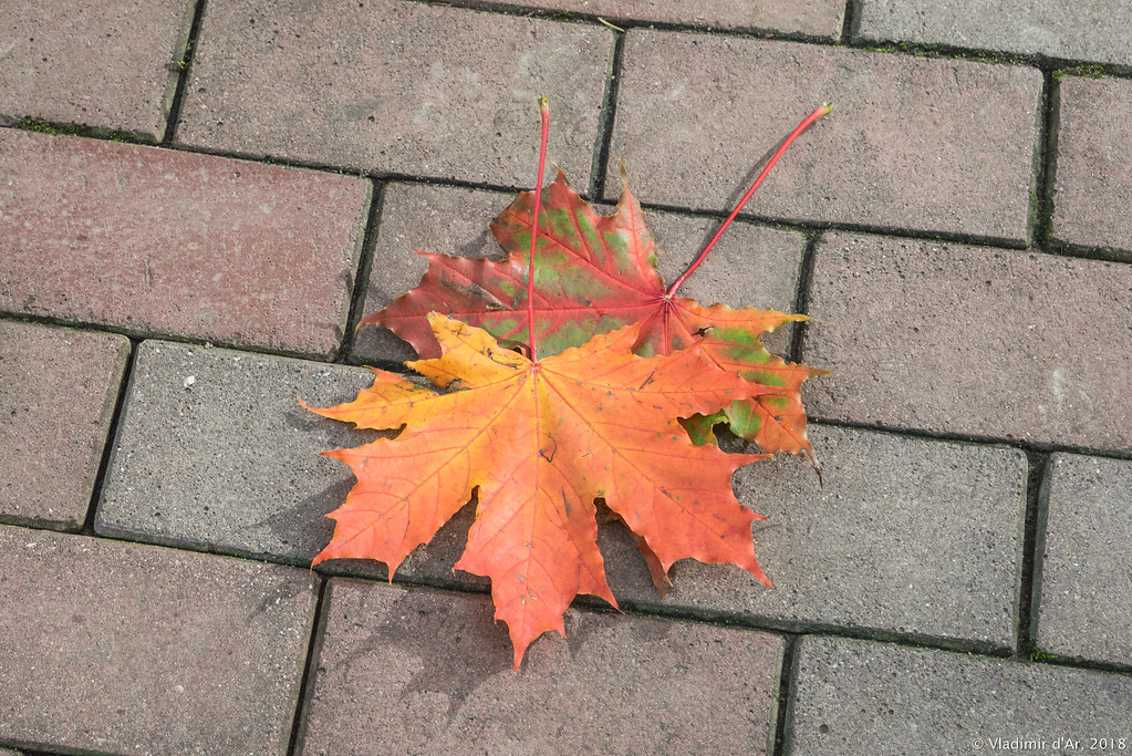 Царицыно - краски осени