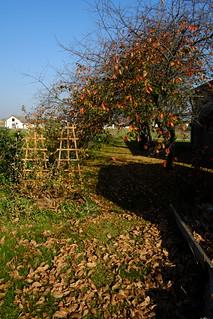 Jesień - Autumn DSCF8589.jpg silky