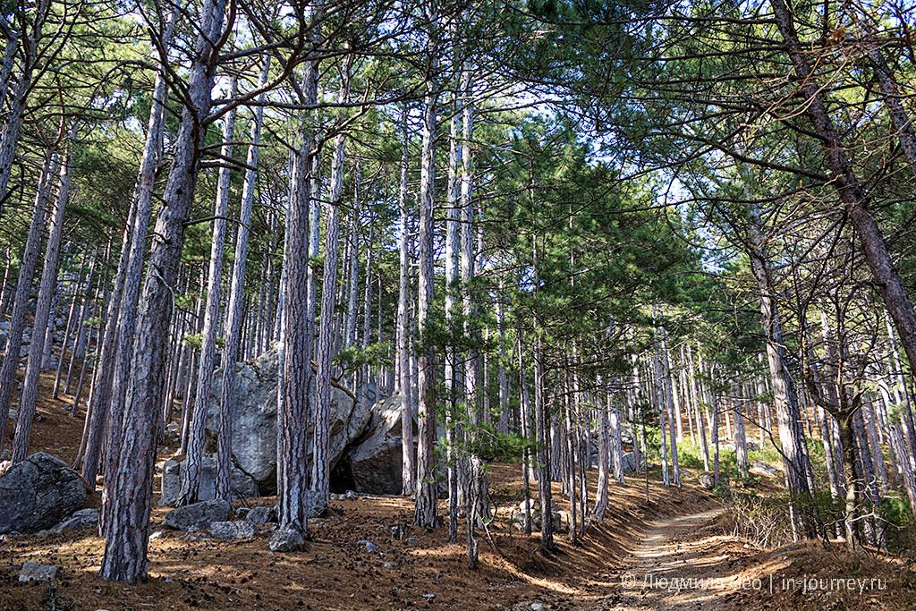 лес на Кореизской тропе к вершине Ай-Петри