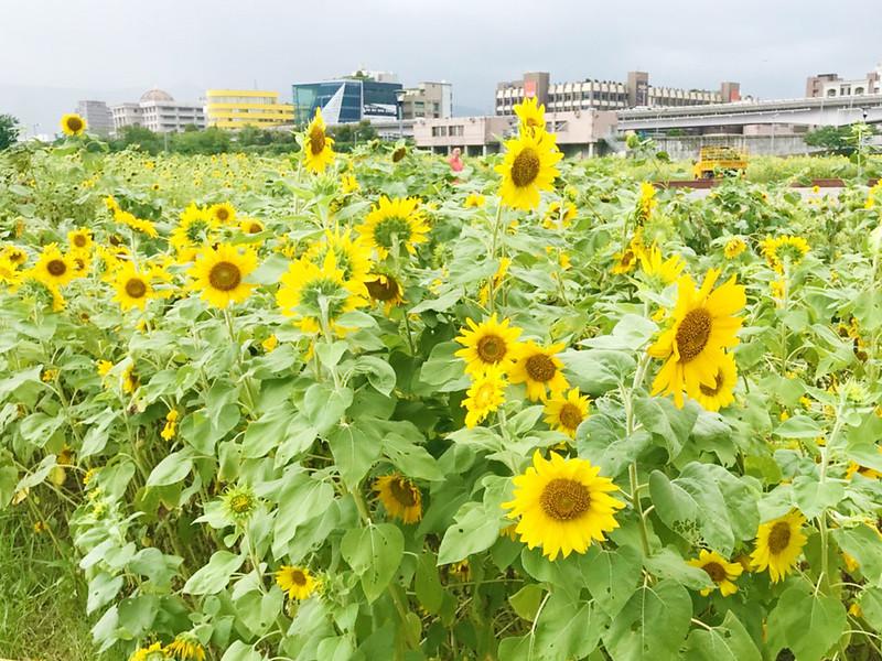 彩虹河濱公園_181006_0014
