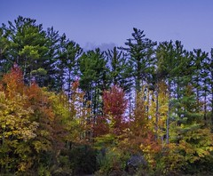 Chapin Forest_20181029_07