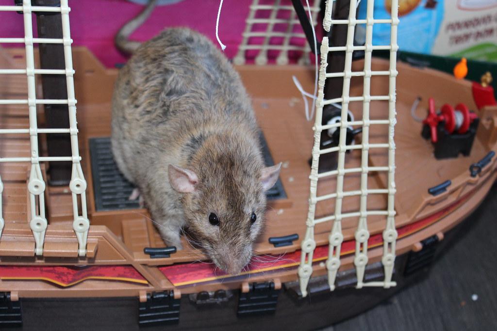 Les ratons dans le vent (la Mollusquerie) - Page 30 44407082765_8cb3912e1c_b
