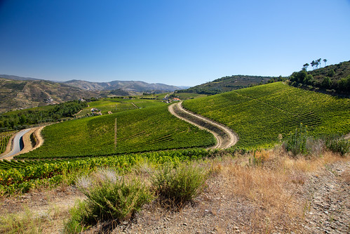 The well-kept vineyards of Quinta Da Fonte Do Milho