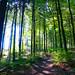 Wanderung zur Wildenburg, im Hunsrück (1)