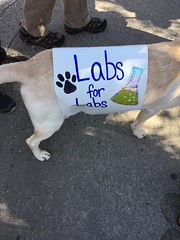 A Dog for Science