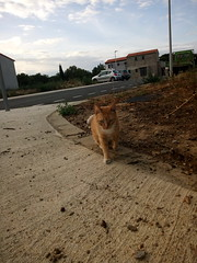 IMG_20180916_082855 - Photo of Montner