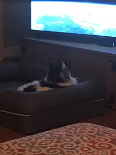 Oliver watches tv when Eve pet sits him