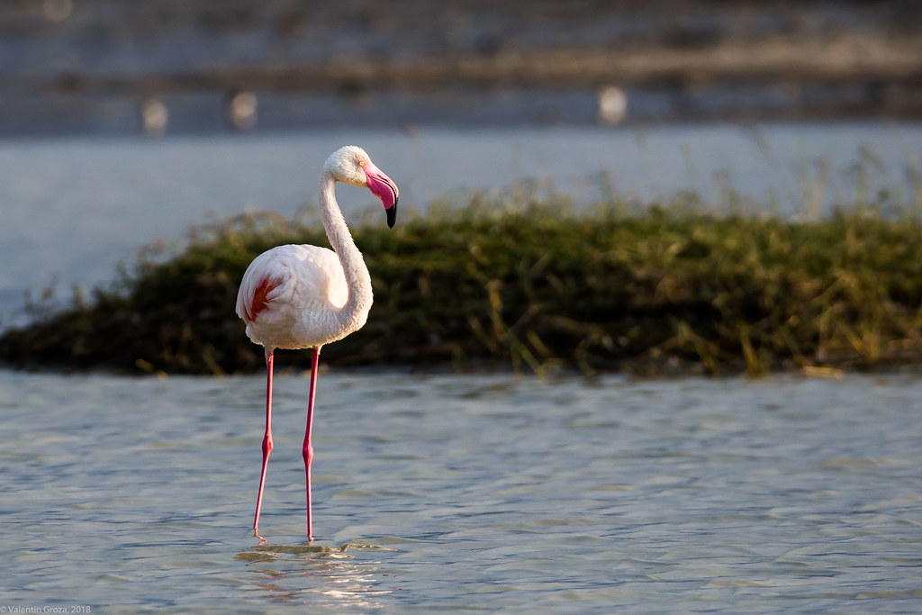 Ngorongoro_18sep18_04_flamingo2