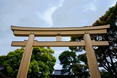 Meiji Jingu Shrine Torii Gates
