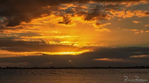Sunset Krammer