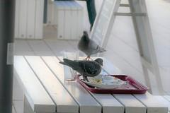 Birds in the town / Vögel in der Stadt