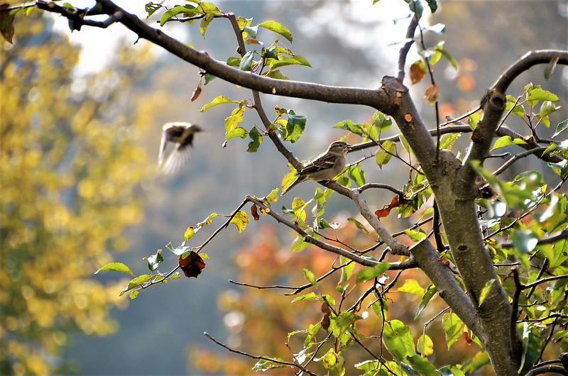 Sparrows 06.11 (13)