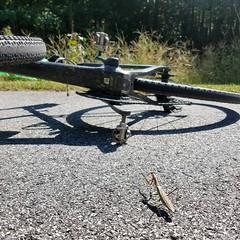 Die bicycle intruder DIE!