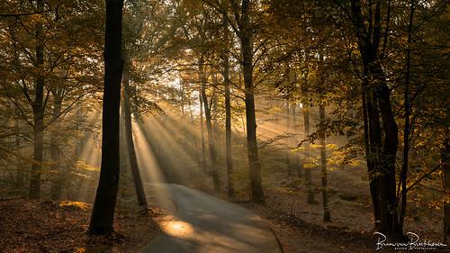 Sun Rays on a misty morning