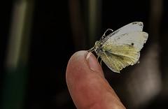 Sauver le papillon - Photo of Tourville-en-Auge