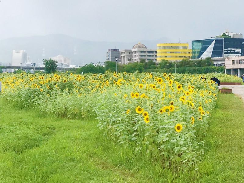 彩虹河濱公園_181006_0012