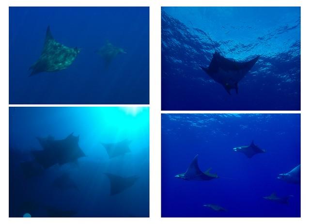 Azoren Unterwasser bearbeitet1
