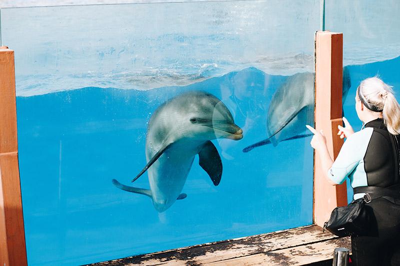 selwo-marina-dolphins