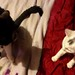Cat chat with Magic & Scamp!