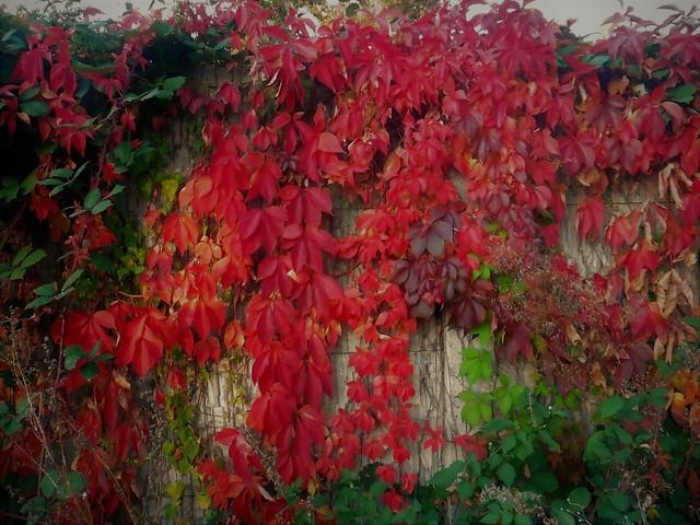 Colourful Leaves, Panasonic DMC-TZ56