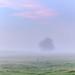 Sunday Morning Mist