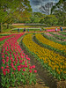 Photo:チューリップの花園で XIX By jun560