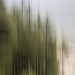 forest by sami kuosmanen