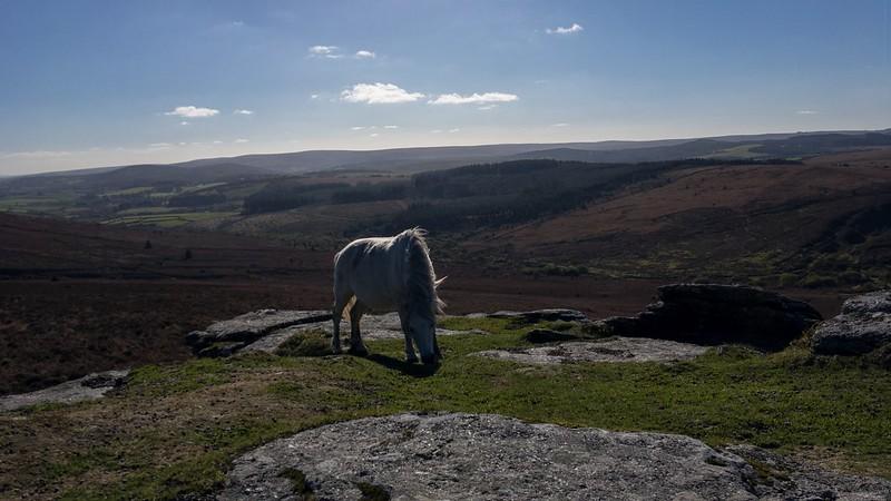 Birch Tor pony