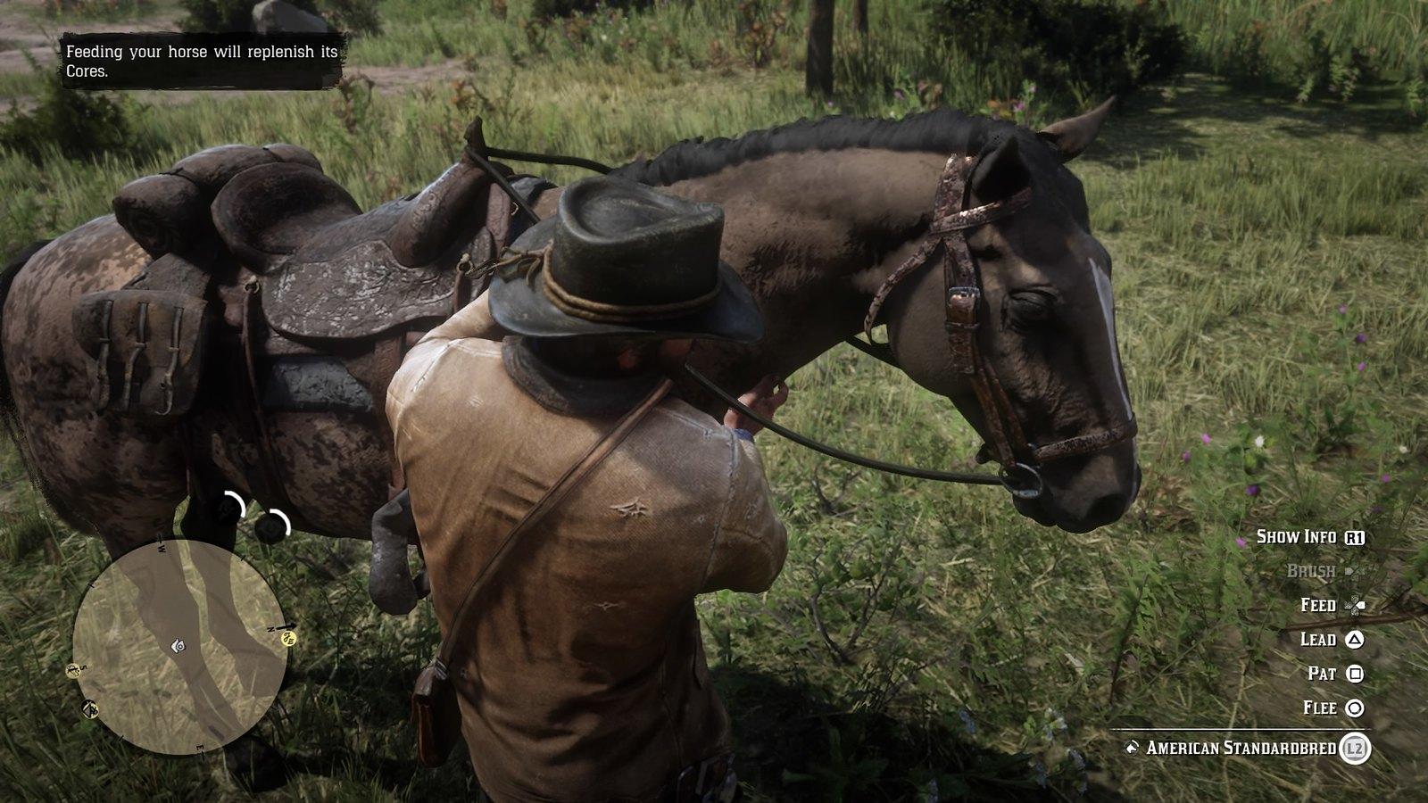 Apkopjam zirgu