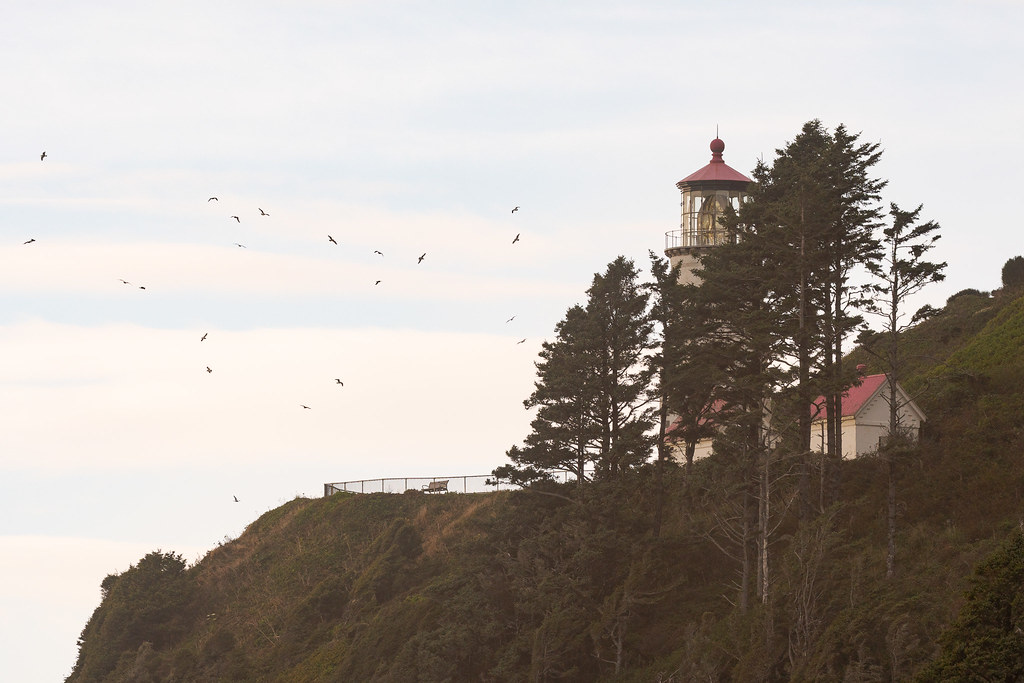 Sea spray lightly obscures the Heceta Head lighthouse as gulls circle overhead late on an October evening in Florence, Oregon