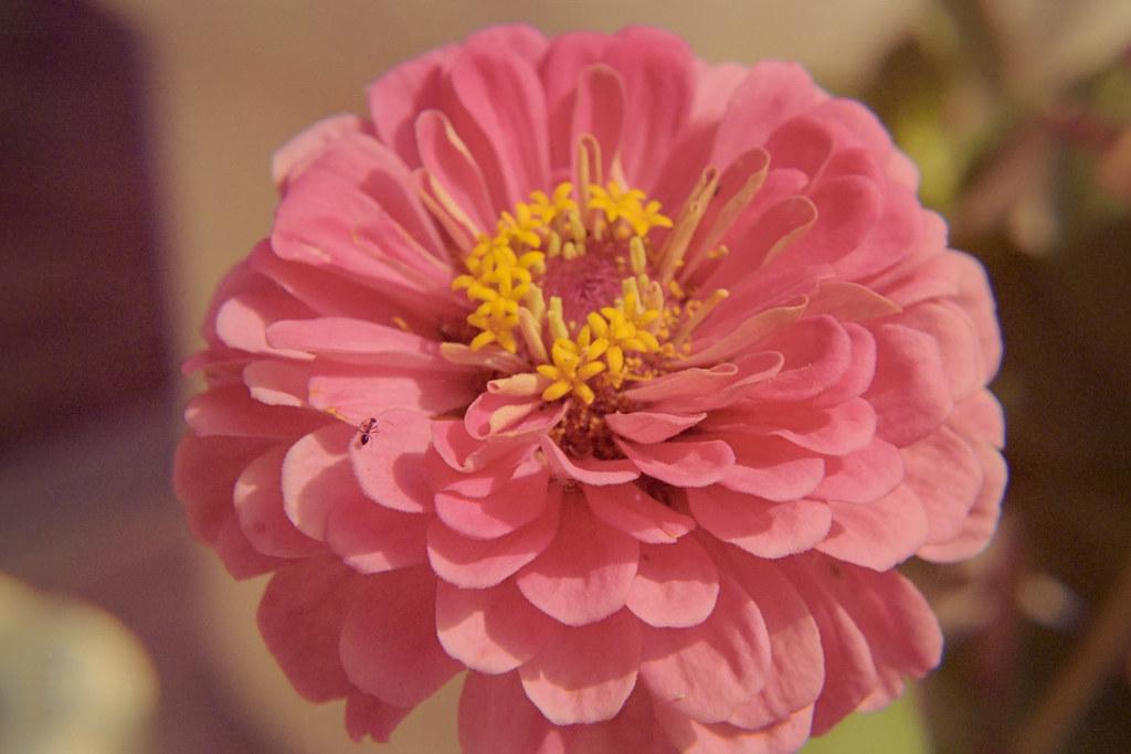 Spring 2018 Flower Closeups V | Nikon FE  Kodak Portra 400 I