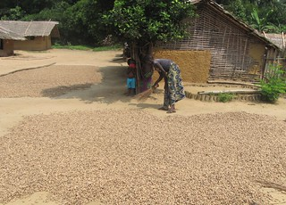 2012_mituku woman tending drying peanuts afer harvest | by teresehart