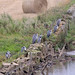 On Guard by Steve (Hooky) Waddingham