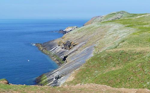 Skomer Island WT- Pembs Wales -May18 (2)