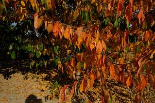 Jesień - Autumn DSCF8597.jpg silky