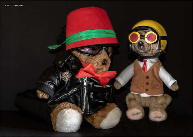 Harley and his Meerkat - DGR Event