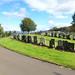 Port Glasgow Cemetery Woodhill (390)